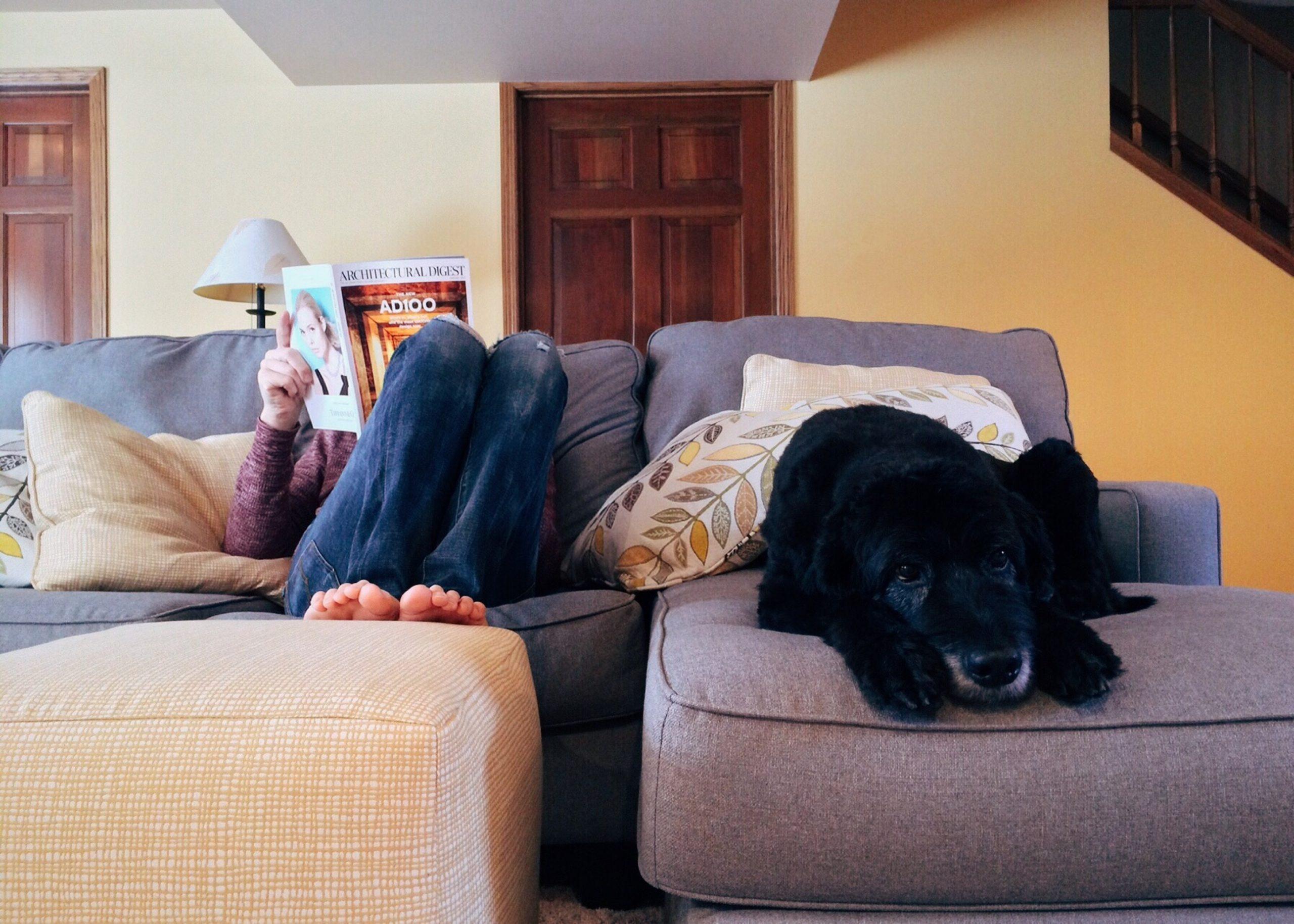 Kutya és a home office forrás: pxhere