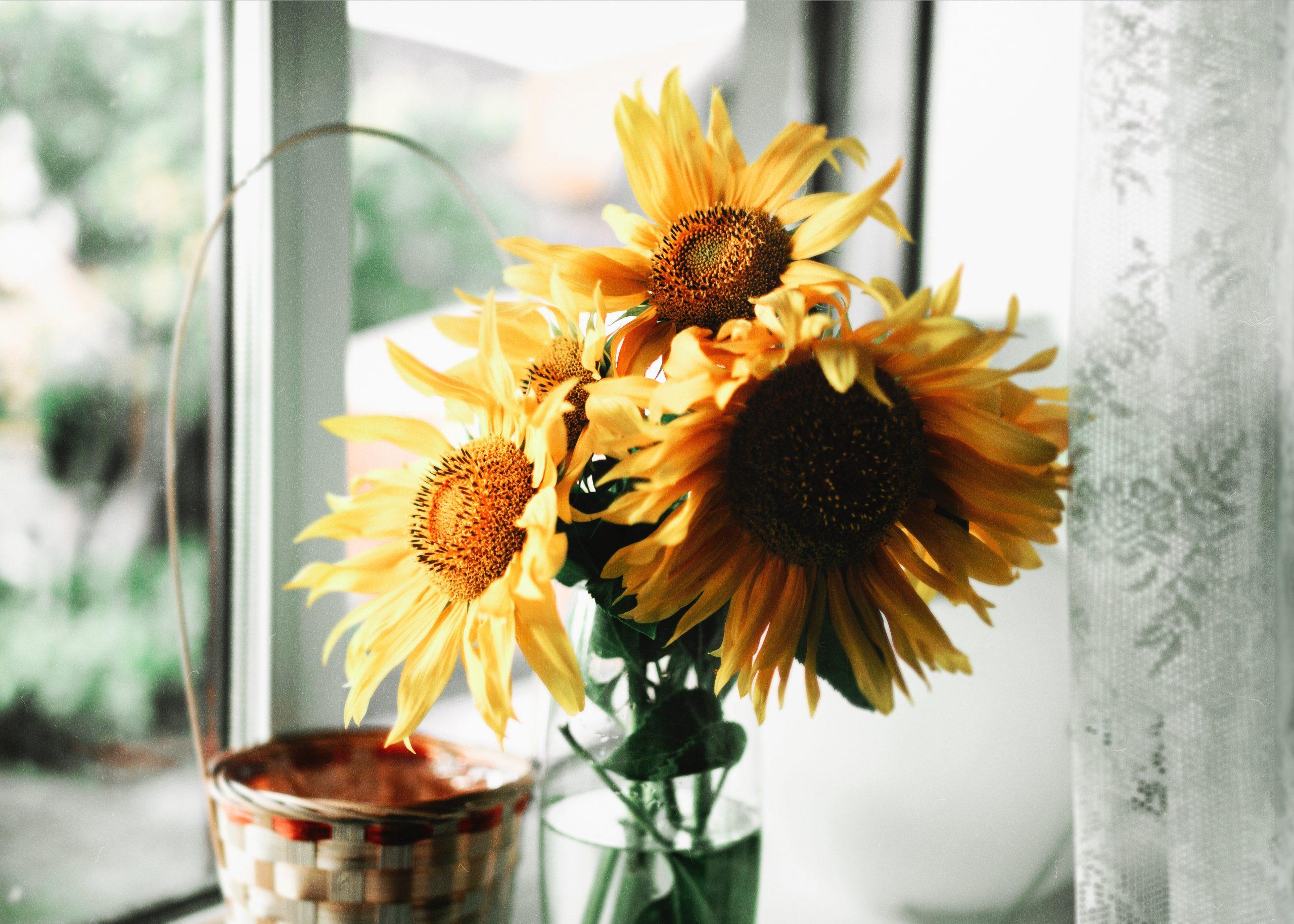 Napraforgó az év virága