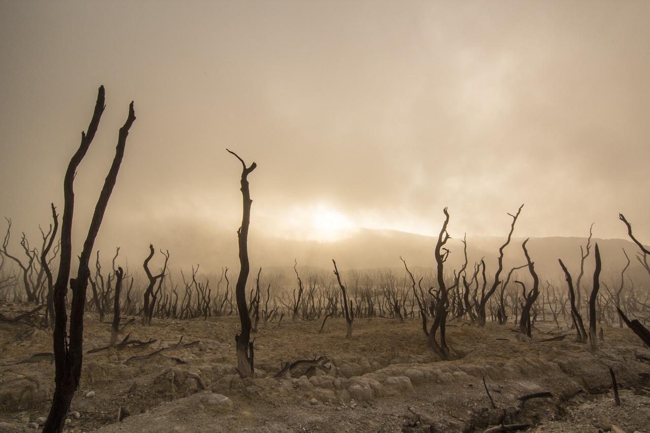 környezetvédelem-Föld