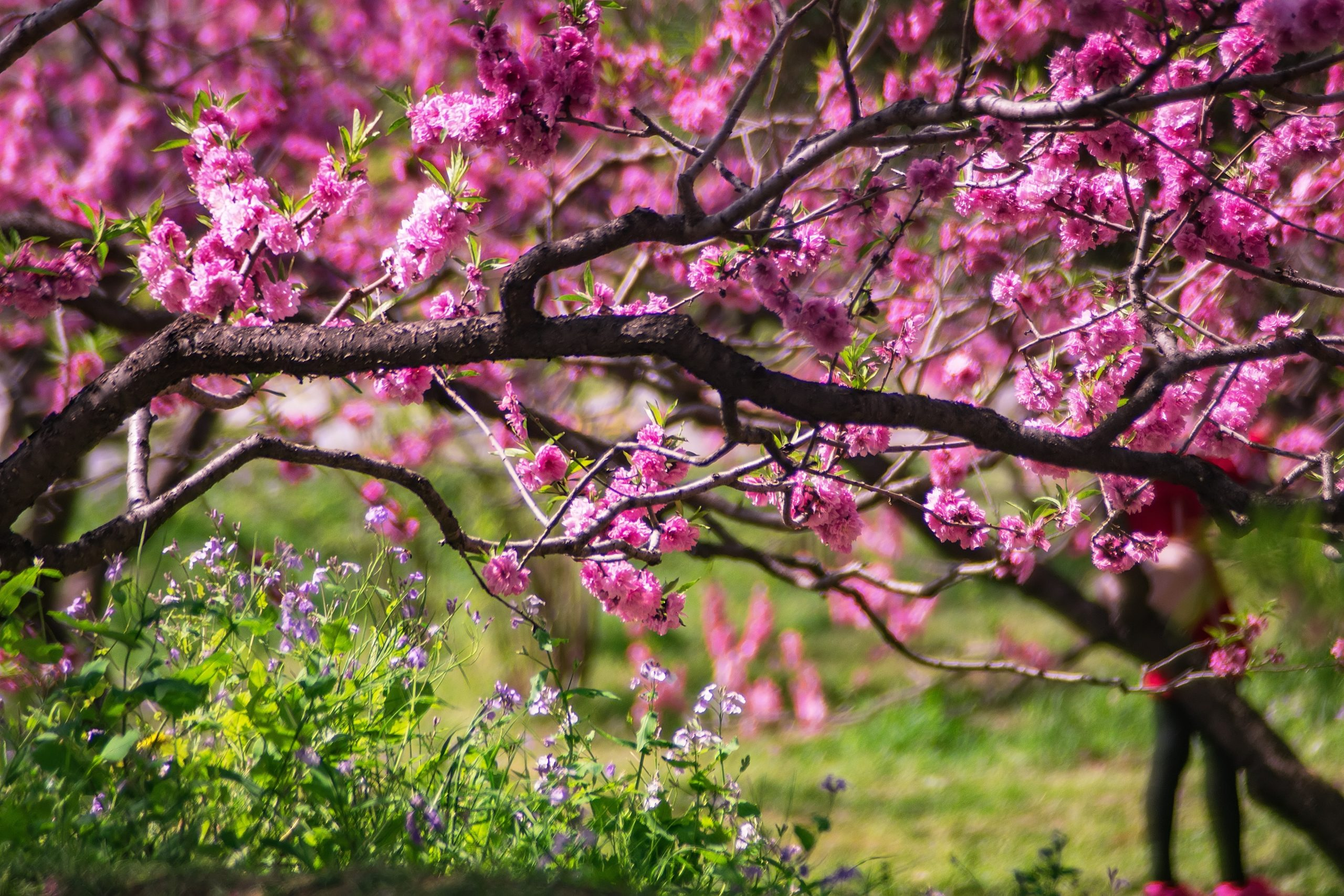 kirándulás-erdő-tavasz