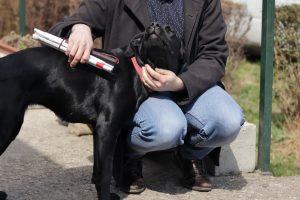 Vakvezető kutya kiképzése