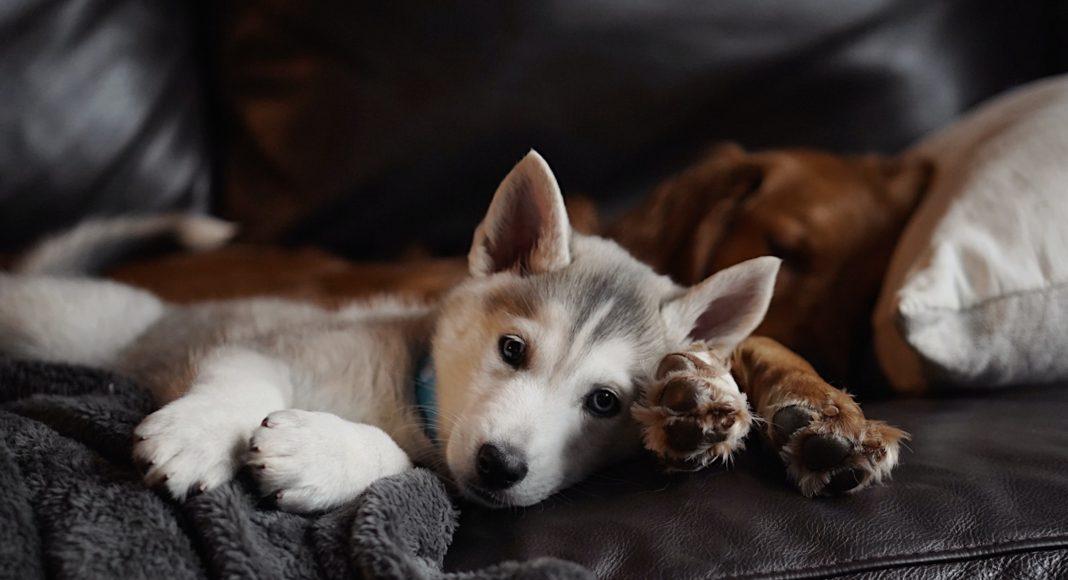 Kutyatartás gazdijogis