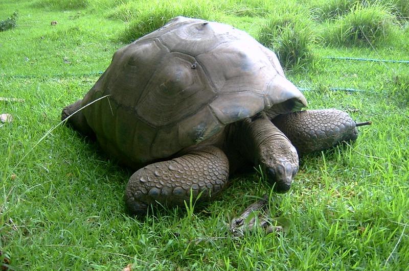 teknős-Jonathan