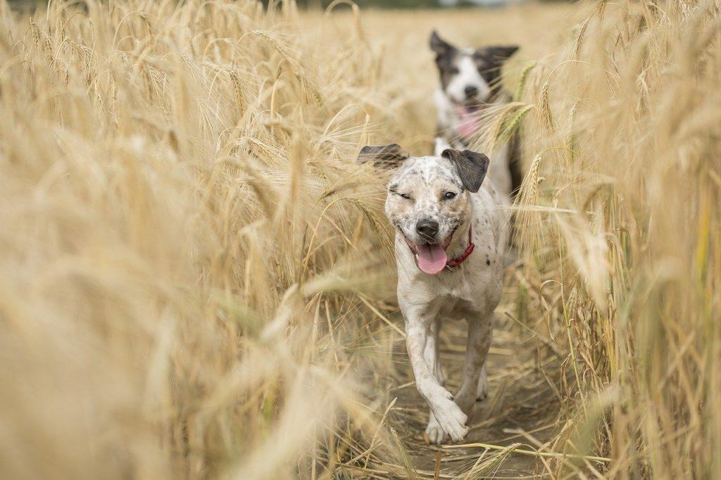 kutya-fut-barát