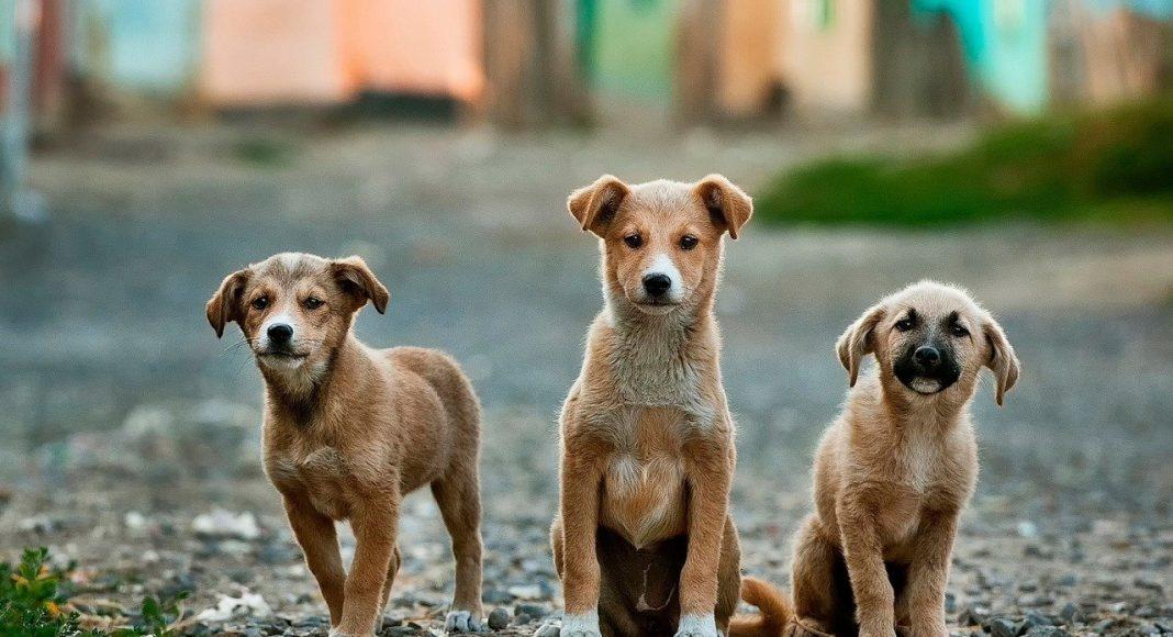 kutyák-barátság