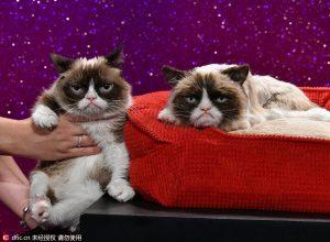 Az eredeti és a viasz Grumpy Cat