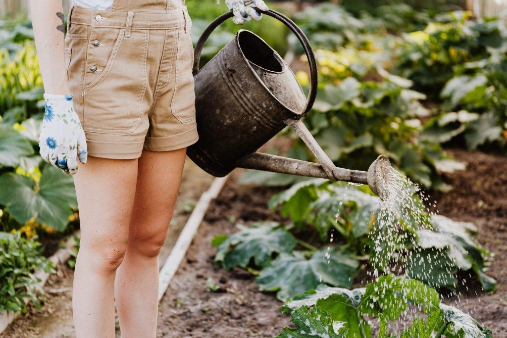 kert-kertészkedés-locsolás