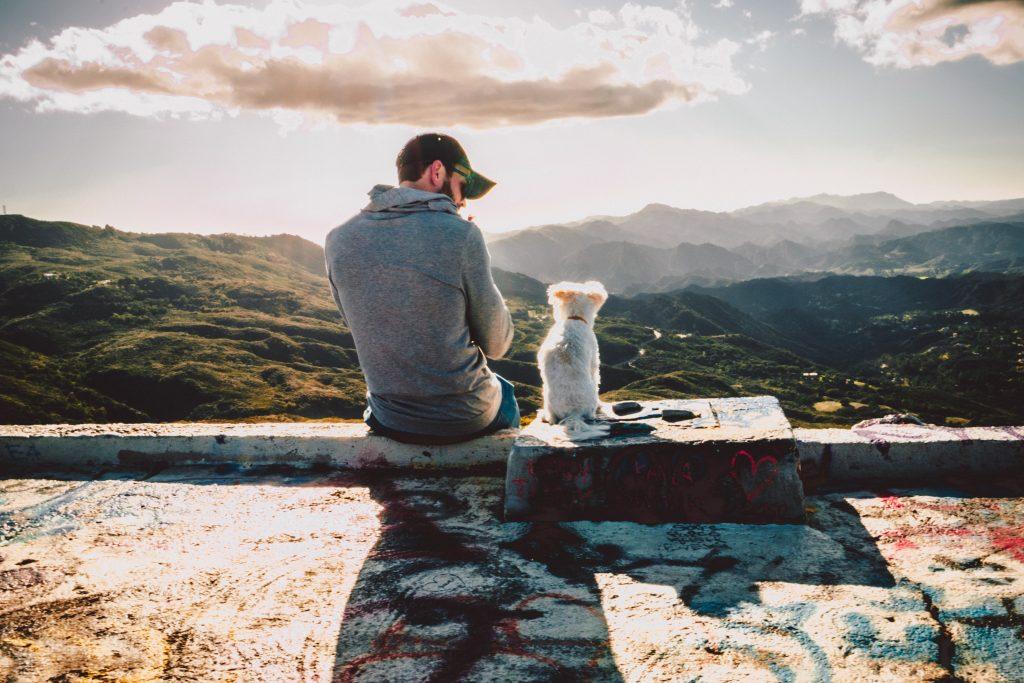 kutya-barátság