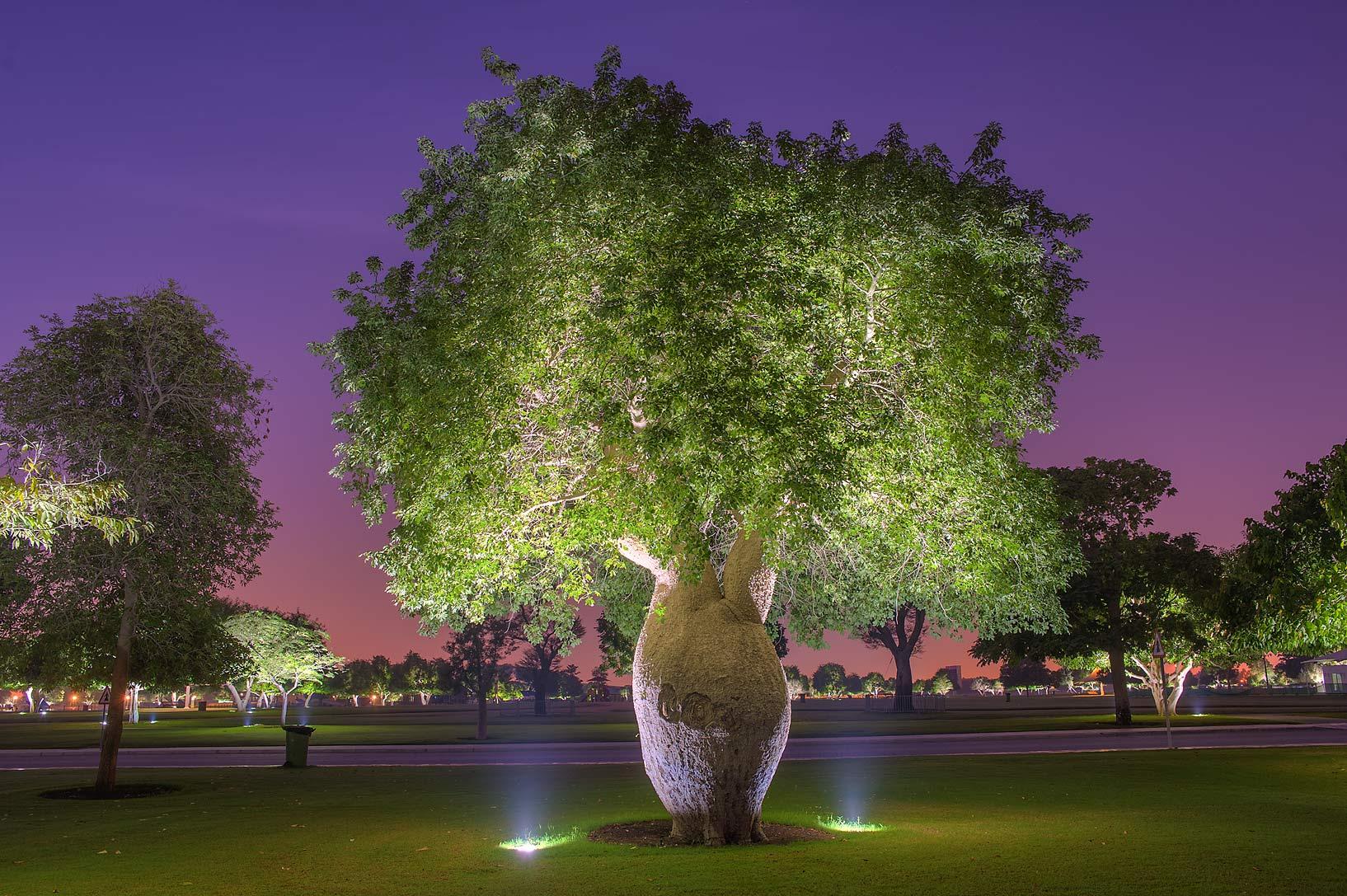 szép fa