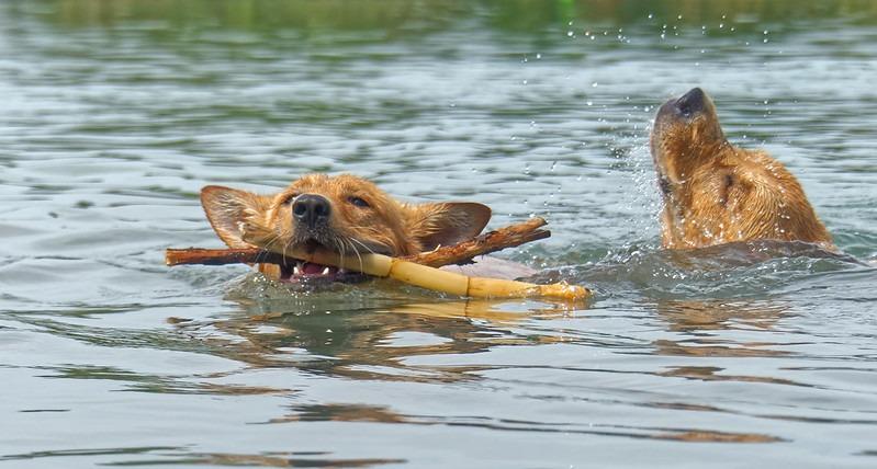 kutyastand-úszás-kutya