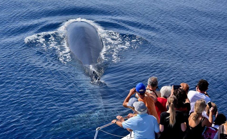 bálnák-bálnales