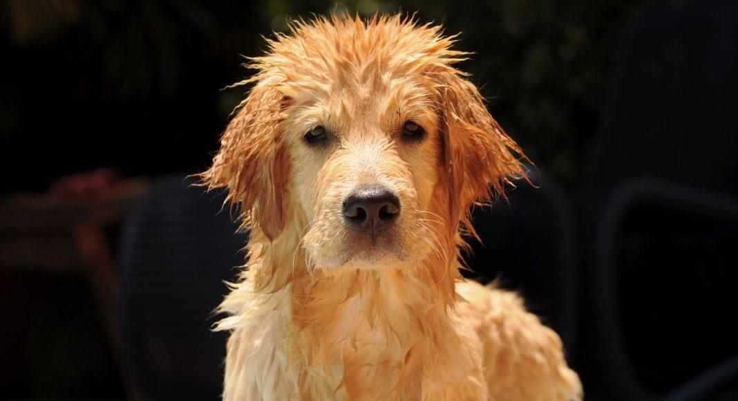 kutyastrand-kutya