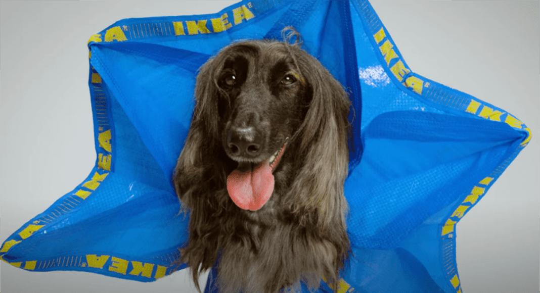 IKEA kutyaruha szatyorból