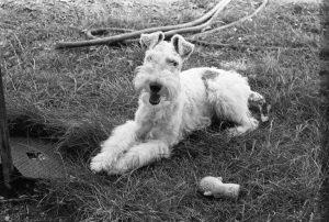 Déry Tibor kutyája