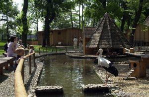 A Margitsziget Vadasparkja